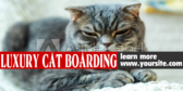 Luxury Cat Boarding