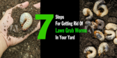 Feed Supply Get Get Rid of Grubs